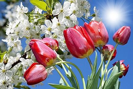 С майскими праздниками поздравляет всех интернет-магазин У Валерончика!